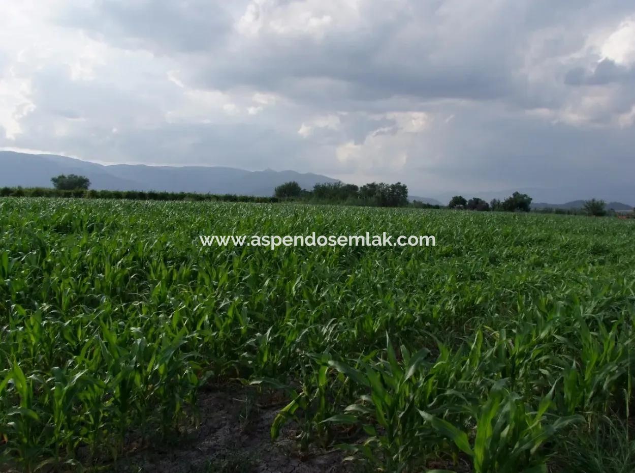 Bauernhof Zum Verkauf In Der Nähe Des Zentrums Von Dalyan,14, 612M2 Bauernhof Zum Verkauf