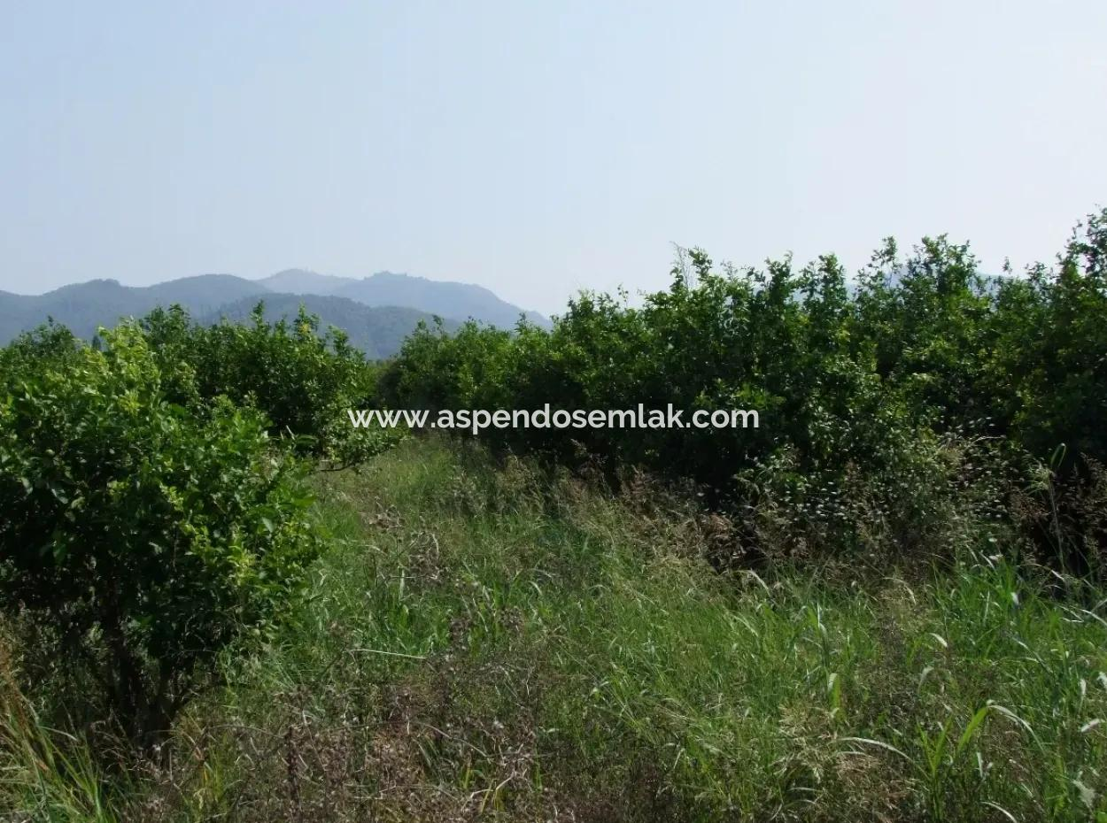 Eksiliyurt Eksiliyurt Zum Verkauf In Zitrone Garten Zum Verkauf In Oriya 16,160M2 Garten Zitrone