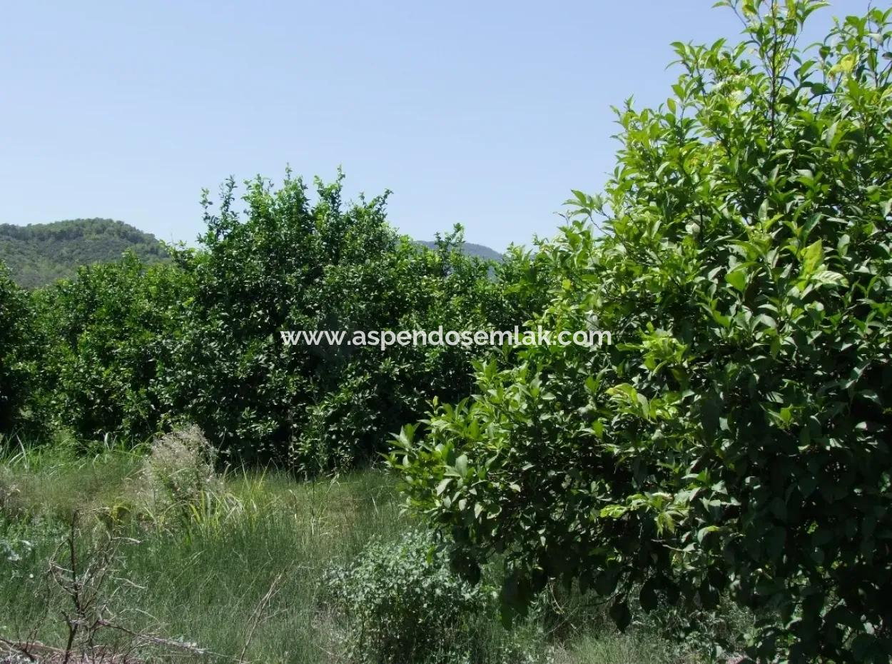 Für Verkauf Grundstück Für Verkauf In Fevziye Oriya Fevziye