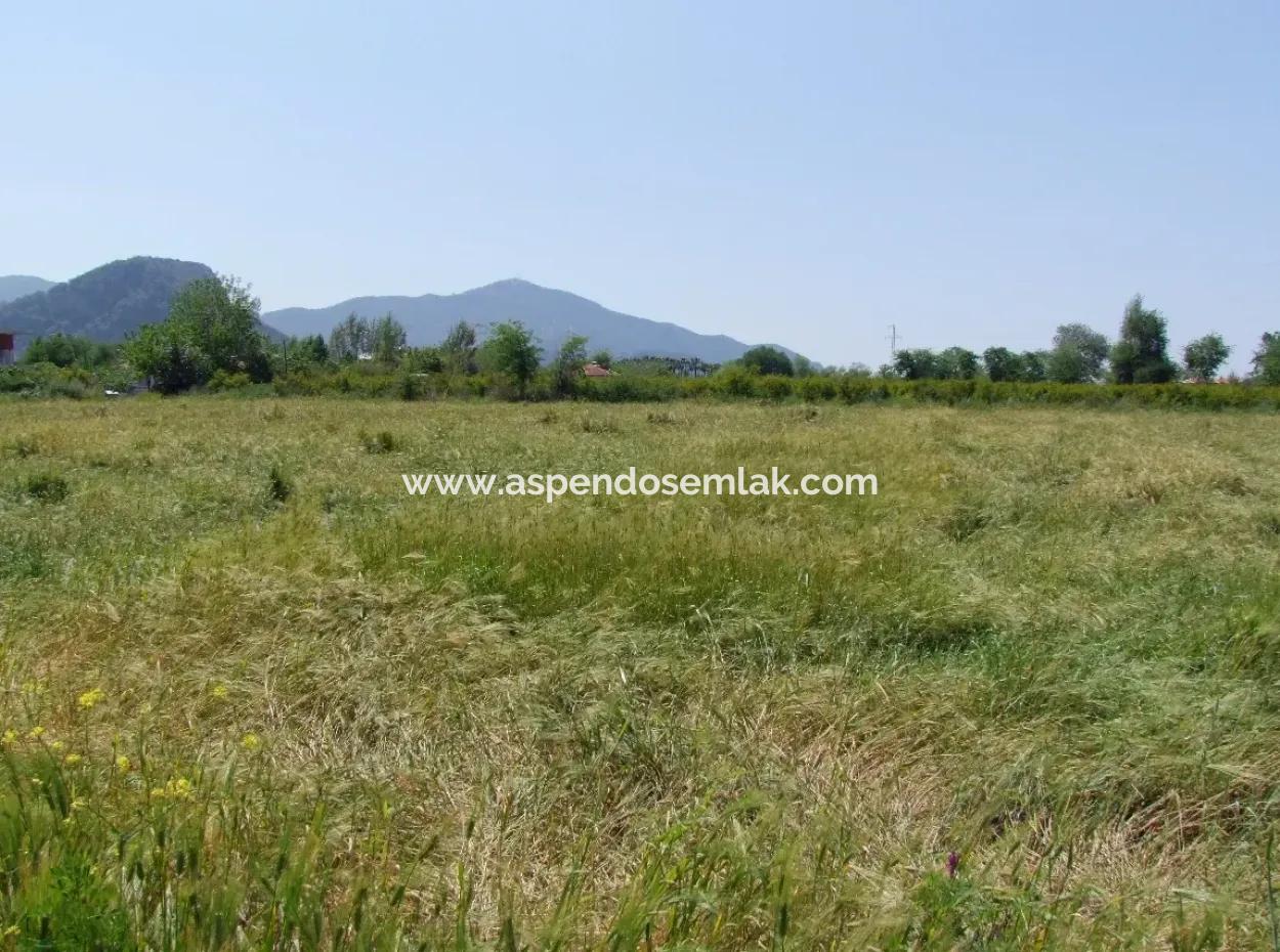 Granatapfel Zum Verkauf In Dalyan Garten 8,600M2 Landwirtschaftlichen Grundstück Zum Verkauf Schnäppchen