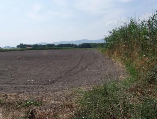 Bauernhof Zum Verkauf In Dalyan Eskikoy Eskikoy Oriya 14,900M2 Grundstück Zu Verkaufen Feld