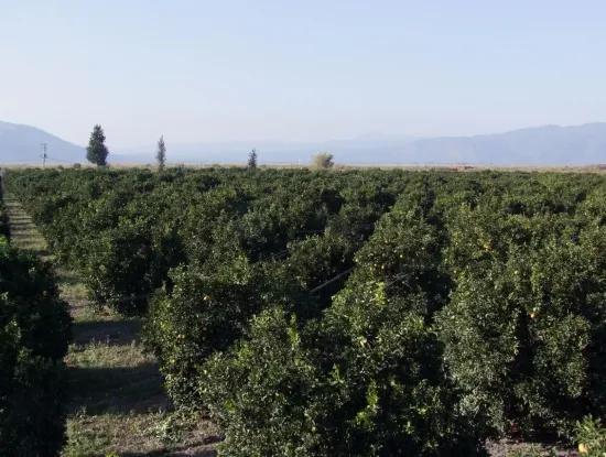Garten Zum Verkauf In Oriya Tepearasi Zwischen Der Peak 65,000M2 Orange Garten Zum Verkauf