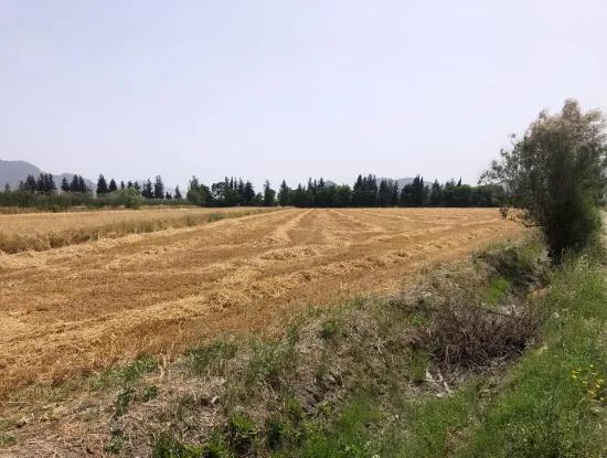 Ackerland Zum Verkauf 39 Hektar In Eskikoy