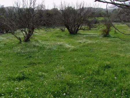 In Incirkoy Uzumlu Fethiye Grundstück Für Verkauf Bauernhof Zum Verkauf In Incirkoy