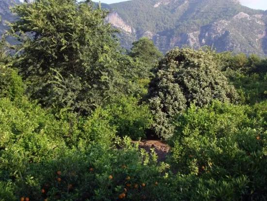 Near The Centre Of Dalyan In Dalyan Plot For Sale For Sale 987M2