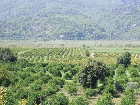 For Sale Farm For Sale In Dalyan 73410M2
