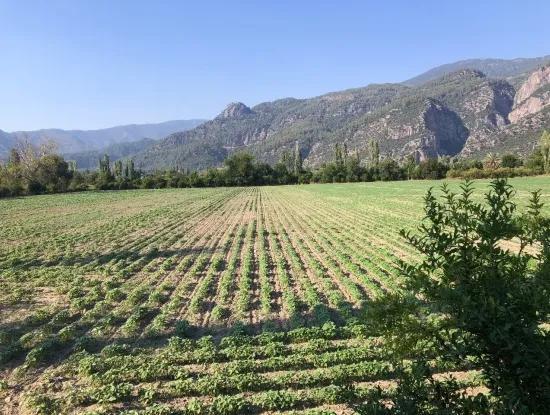 46000M2 Yatirimlik Land For Sale In Koycegiz