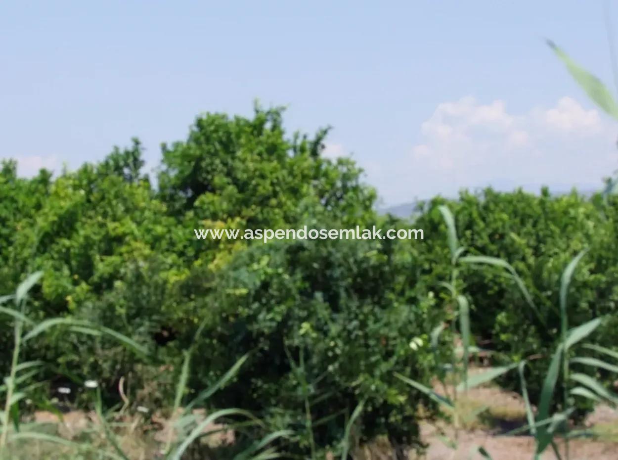 Ortaca Satılık Limon Bahçesi Ortaca Sarıgerme Yoluna Sıfır 83,670M2 Satılık Arsa Tarla Bahçe