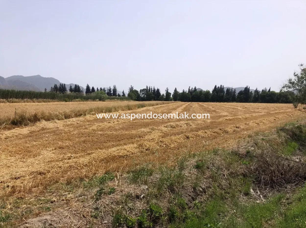 Eskiköy'De 39 Dönüm Çiftlik Arazisi Satılıktır