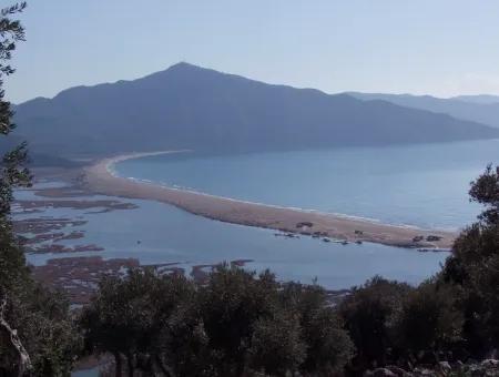 Çandır Deniz Manzaralı Satılık Arsa Çandır'Da 16,769M2 Zeytinlik Emlak Kelepir Estate Tarla Satılık Arsa
