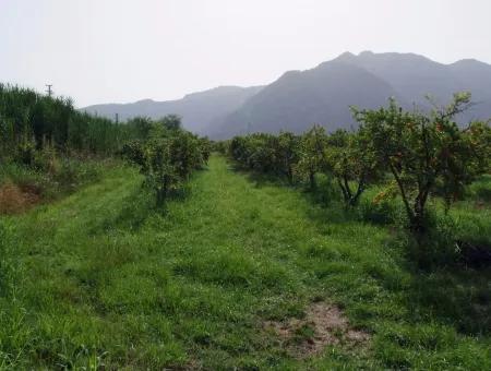 Dalyan İztuzu Satılık Bahçe Dalyan Göle Sıfır Satılık Arsa