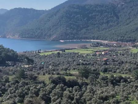 Ekincik Satılık Arsa Deniz Manzaralı 2,535M2 Satılık Arsa Köyceğiz Ekincik